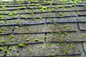 moss building up on shingles
