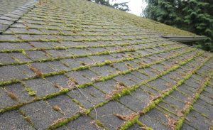 roof stains and moss covering shingle roof